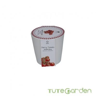 Mi-huerto-urbano-Tomates-cherrys-13701006-Herstera