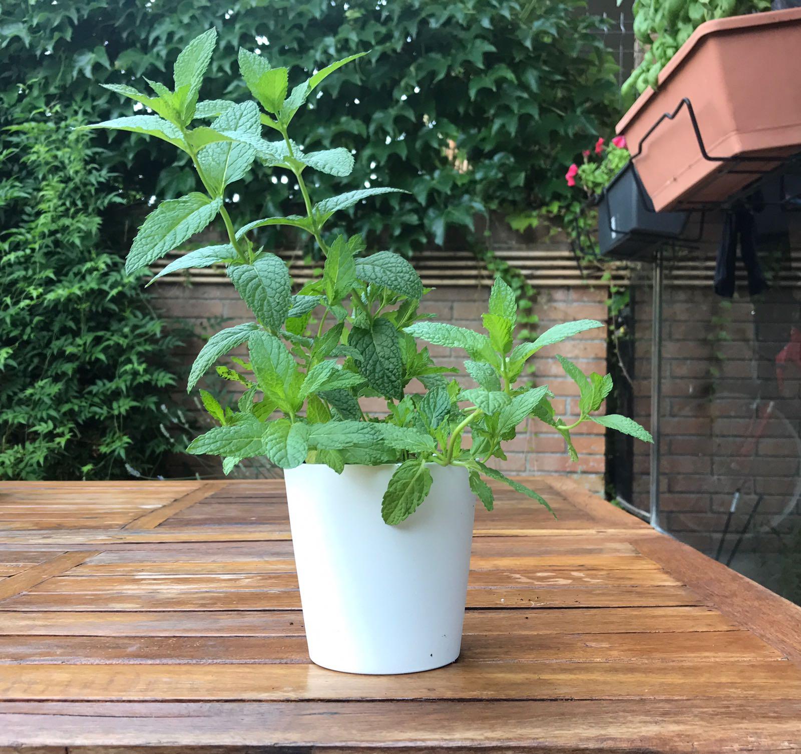 Plantas De Exterior Para Macetas Of Plantas De Exterior En Maceta Simple Dancepandas Colgador
